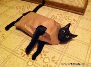 let-the-cat-out-of-the-bag-humor